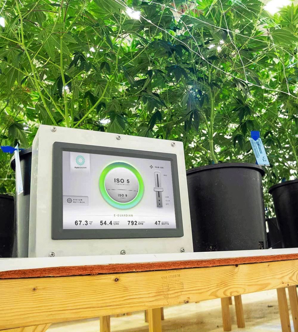 E-guardian monitoring system in cannabis grow