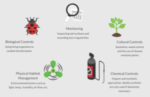 Graphic with steps of integrated pest management. Get Rid of Powdery Mildew